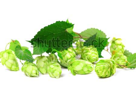 Blossoming hop with leaves Stock photo © BSANI