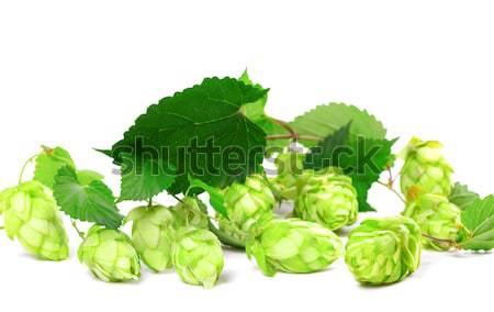 хмель листьев белый пива природы Сток-фото © BSANI