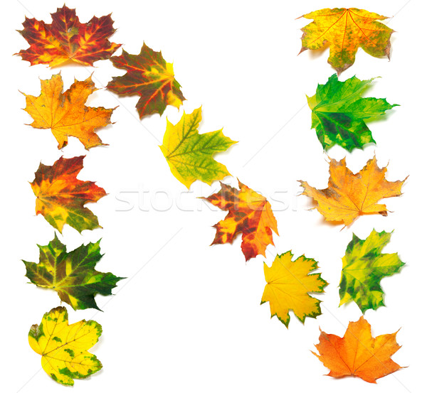 Letter N composed of autumn maple leafs Stock photo © BSANI