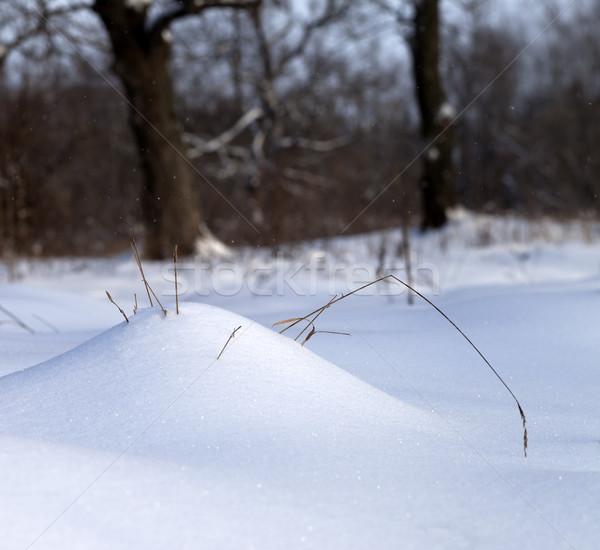 日光 雪 草 冬 森林 ストックフォト © BSANI
