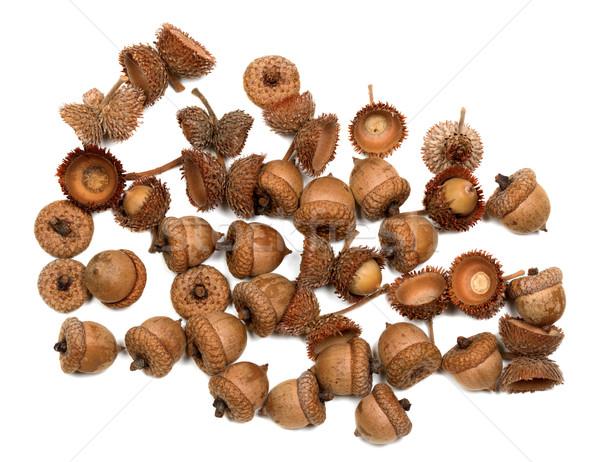 Autumn oak acorns Stock photo © BSANI
