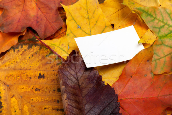 Autumn multicolor leafs with empty price card Stock photo © BSANI
