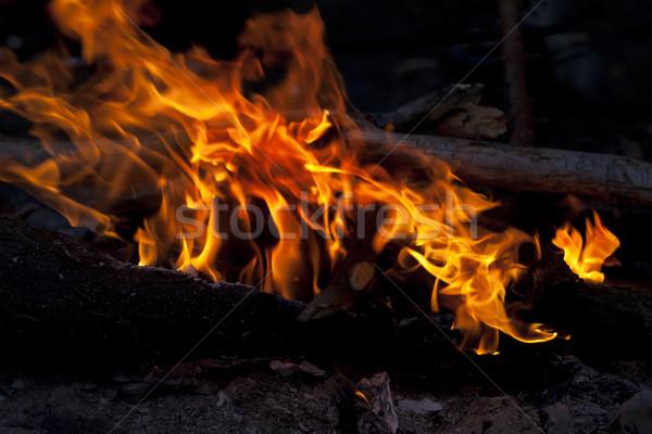 Fogueira floresta noite luz cozinhar quente Foto stock © BSANI