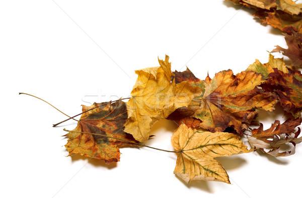 Autumn dried maple leafs Stock photo © BSANI