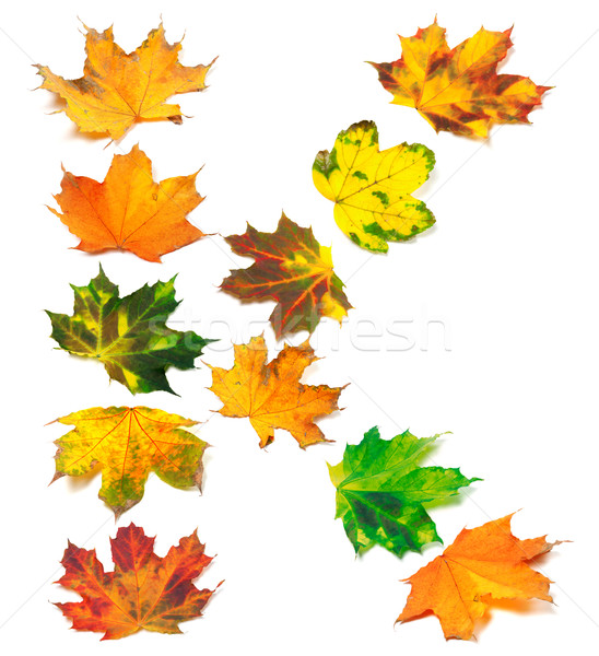 Letter K composed of autumn maple leafs Stock photo © BSANI