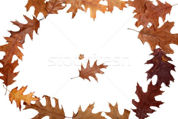 Frame of autumn dried oak leaves Stock photo © BSANI