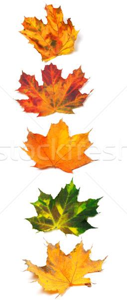 Letra i outono bordo isolado branco escolas Foto stock © BSANI