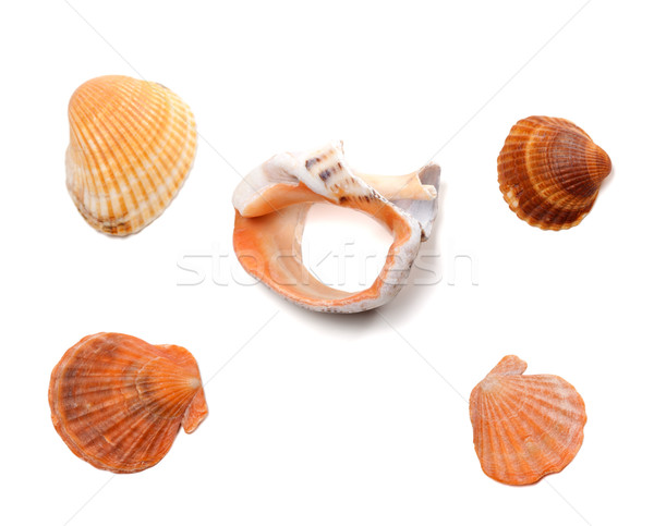 Broken rapana and seashells isolated on white background Stock photo © BSANI