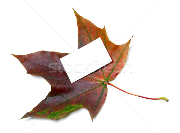 Multicolor autumn maple-leaf with white empty price card Stock photo © BSANI