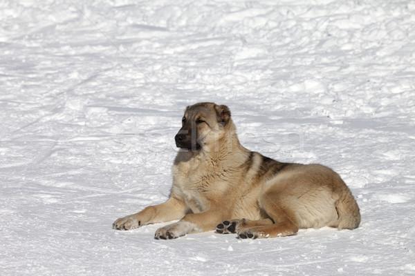 犬 いい 太陽 日 ストックフォト © BSANI
