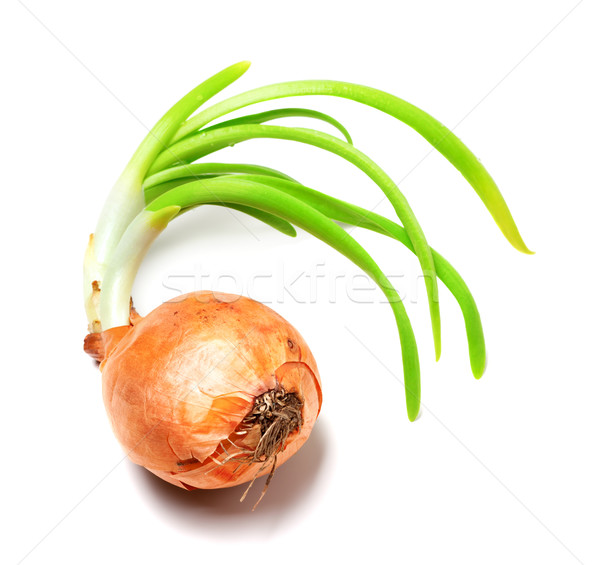 Spring onions on white background Stock photo © BSANI