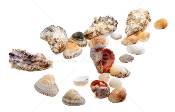 Seashells isolated on white background Stock photo © BSANI