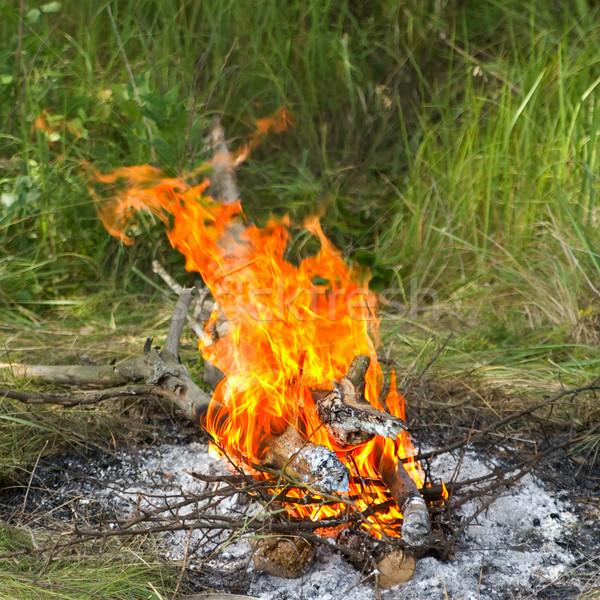 şenlik ateşi orman gıda doğa ışık yeşil Stok fotoğraf © BSANI