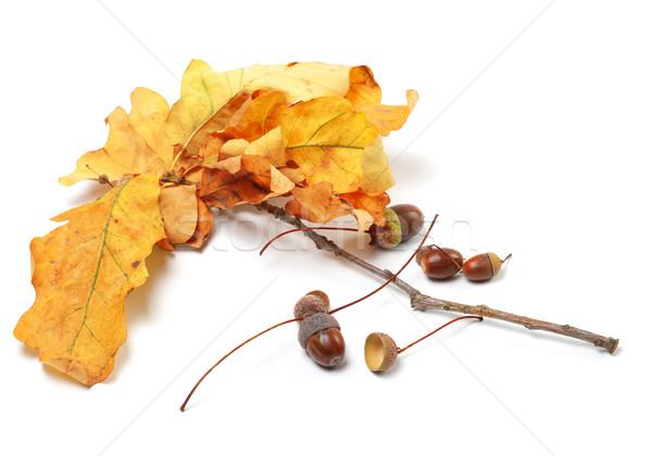 ストックフォト: 秋 · オーク · 葉 · 木材 · 森林 · 自然