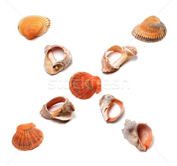 Letter X composed of seashells Stock photo © BSANI