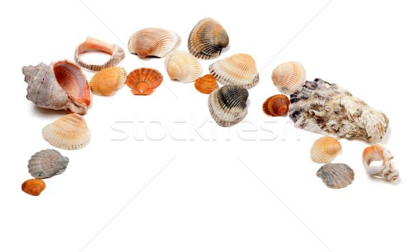 Collection of seashells  Stock photo © BSANI