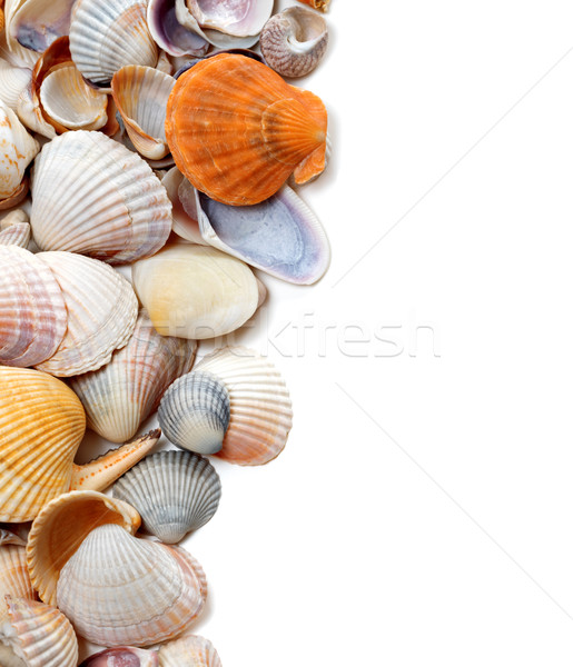Natural background of seashells Stock photo © BSANI