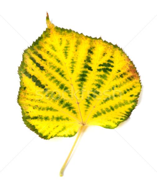 Yellowed autumn leaf Stock photo © BSANI