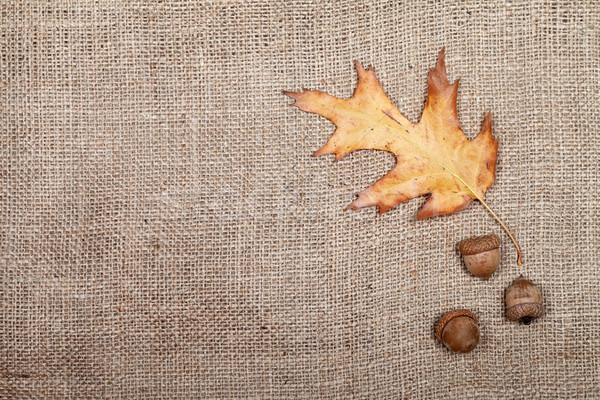 ősz aszalt levél tölgy három felülnézet Stock fotó © BSANI