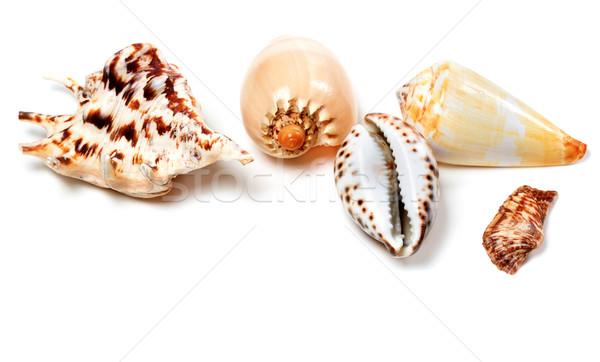 Exótico conchas branco isolado cópia espaço praia Foto stock © BSANI
