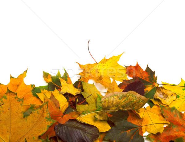秋 孤立した 白 コピースペース 自然 ストックフォト © BSANI