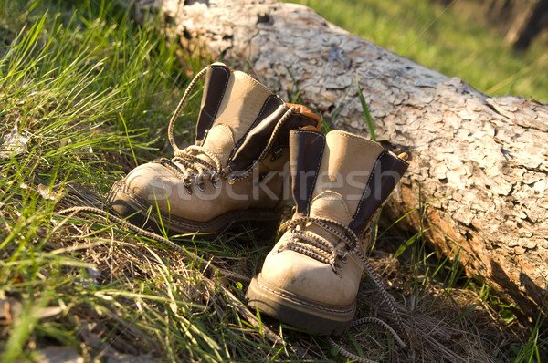 Pair of trekking boots in forest Stock photo © BSANI