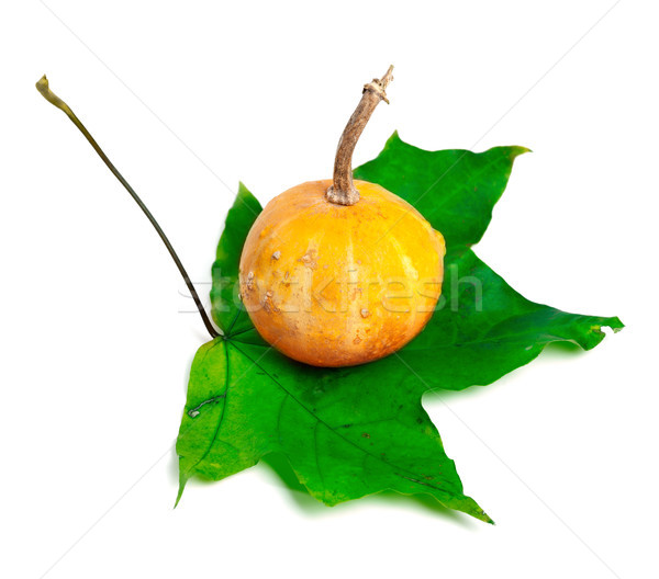 Décoratif faible citrouille vert isolé blanche Photo stock © BSANI