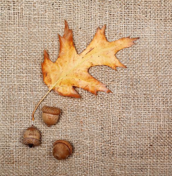 Jesienią suszy liści dąb trzy worek Zdjęcia stock © BSANI