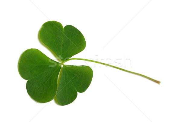 Green clover leaf Stock photo © BSANI