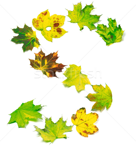 Letter S composed of multicolor maple leafs Stock photo © BSANI