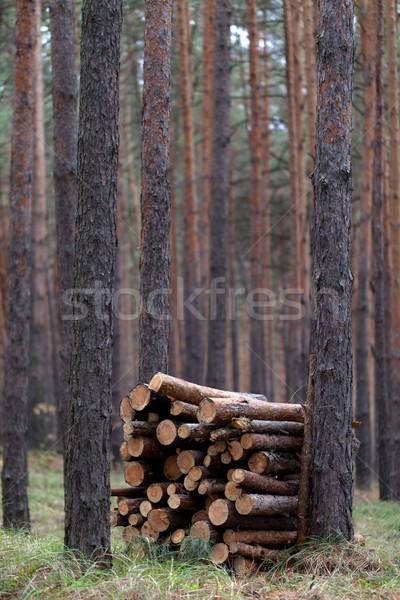 Brandhout pine bos brand natuur Stockfoto © BSANI