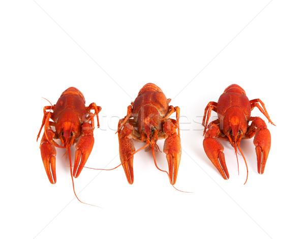 Three boiled crawfish Stock photo © BSANI