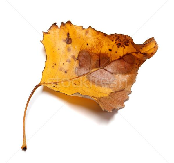 Autumn yellow leaf Stock photo © BSANI