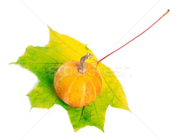 Decorative pumpkin on yellowed maple-leaf on white background Stock photo © BSANI