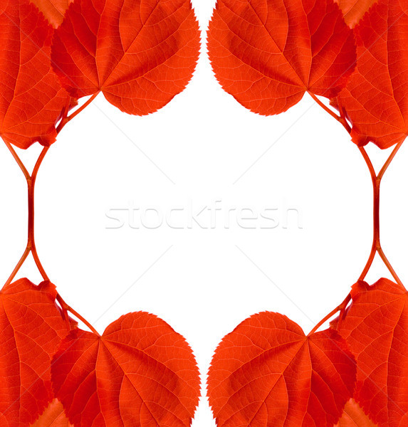 Frame of red autumn leaves Stock photo © BSANI