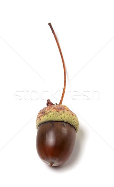 Fallen acorn on white background Stock photo © BSANI