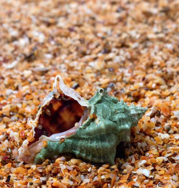 Nedves kagyló homok nap nyár nap Stock fotó © BSANI