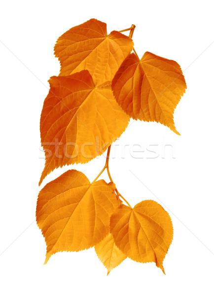 Autumn sunlight leafs  Stock photo © BSANI