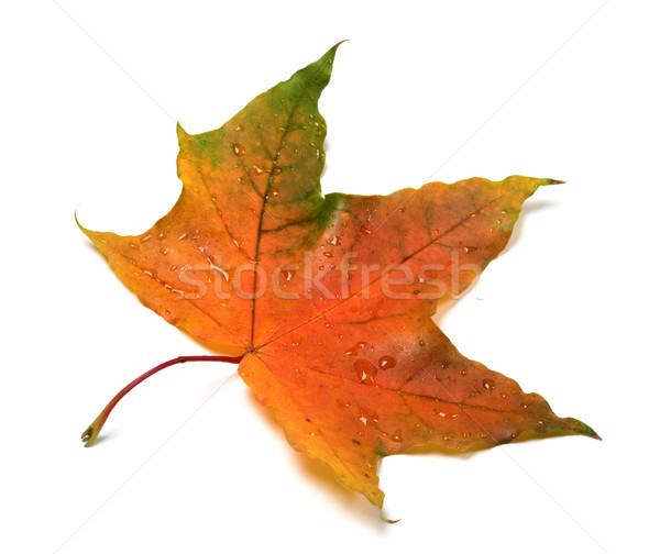 Stockfoto: Najaar · waterdruppels · geïsoleerd · witte · bos · natuur