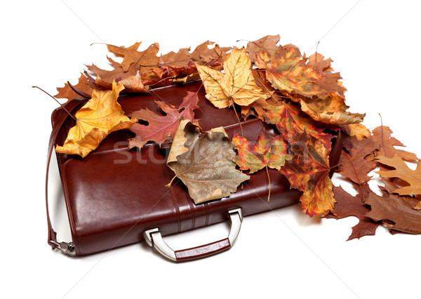 Kahverengi deri evrak çantası sonbahar kuru yaprakları Stok fotoğraf © BSANI