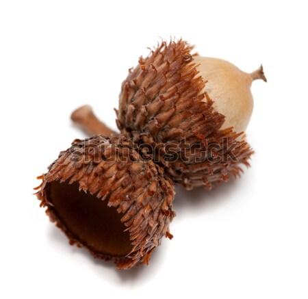 Empty autumn acorn hat on white background Stock photo © BSANI