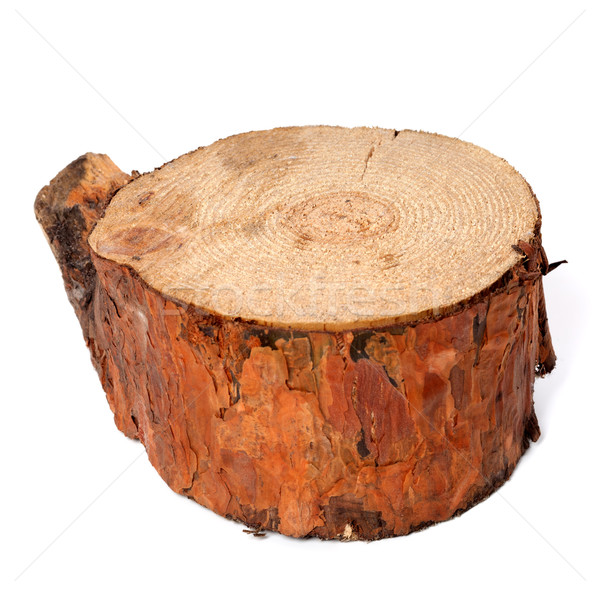 Stump of pine tree Stock photo © BSANI