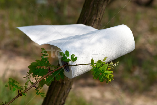 Paper towel roll waving in the wind in forest at sun day Stock photo © BSANI