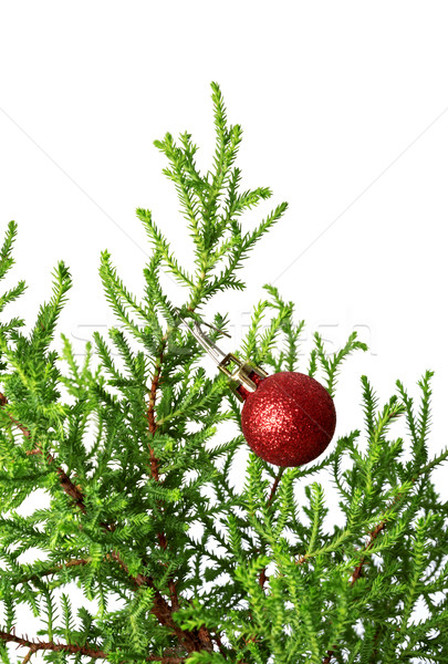 Green branch of decorative home pine tree with red Christmas-tre Stock photo © BSANI