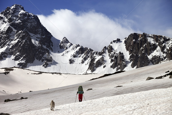 Hiker with dog at spring snow mountains Stock photo © BSANI