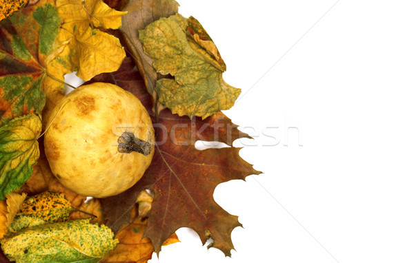 Small decorative pumpkin on dry autumn multicolor leafs Stock photo © BSANI