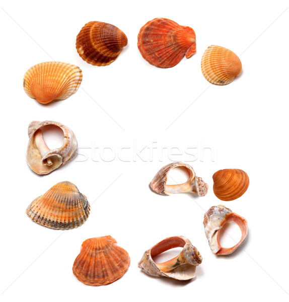 Letter G composed of seashells Stock photo © BSANI