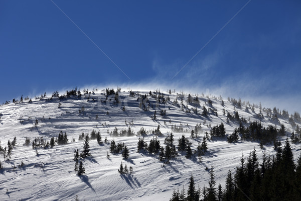 Winter Carpathian Mountains at sun windy day Stock photo © BSANI