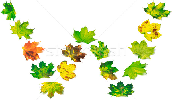Letter W composed of multicolor maple leafs Stock photo © BSANI