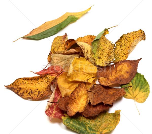 Multicolor autumn leafs Stock photo © BSANI